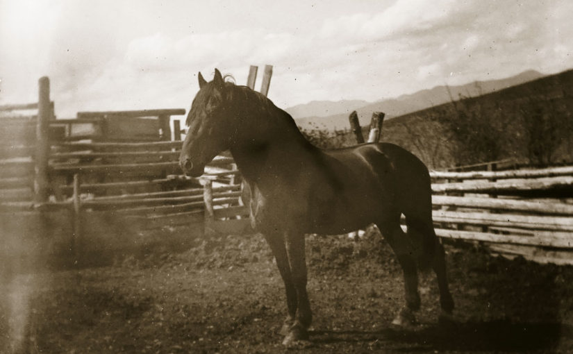 Glass Negatives from Montana
